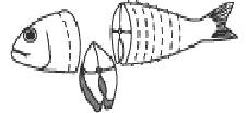 fish darne