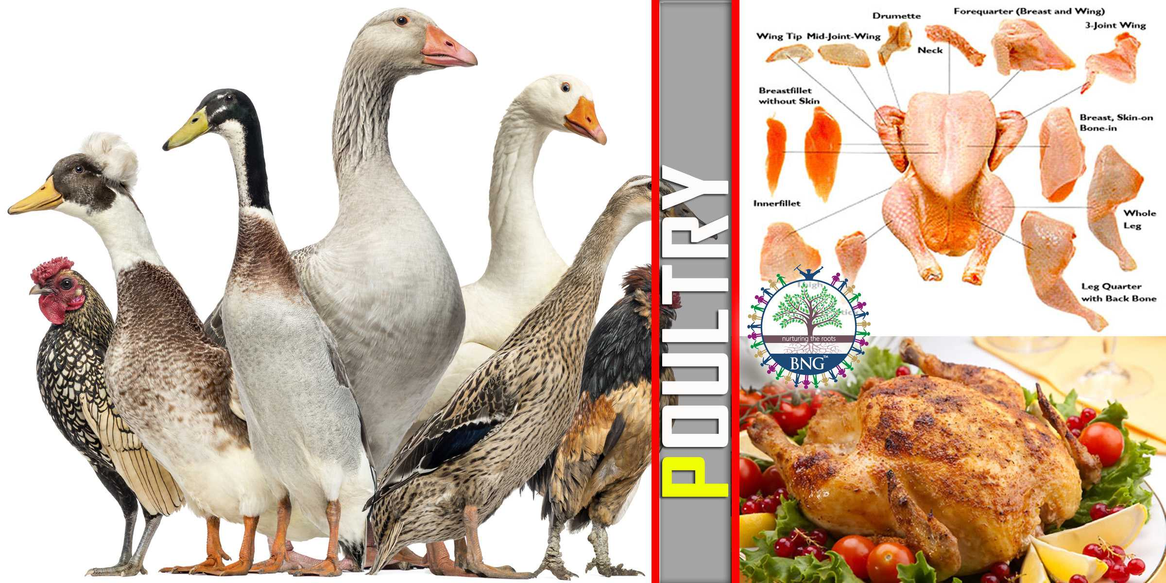 Free Range Chicken | MORLEY BUTCHERS